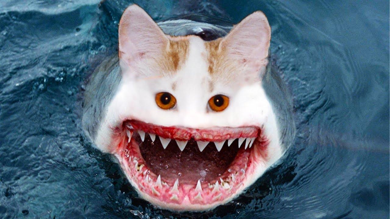 акула прикол картинка недавнего времени вообще