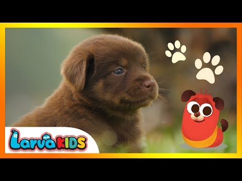 [NEW!] animal song | kids song | ANIMAL FRIENDS | larva kids | live action