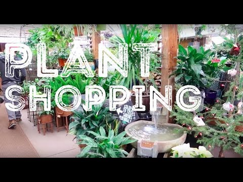 Plant Shopping At Rick's Garden Center