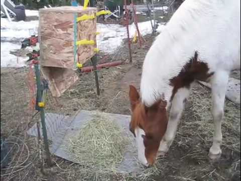 Automatic Horse Hay Feeder Timer Programable Youtube