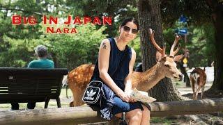 Big in Japan - My Travel Series - Nara - Deers and Fun