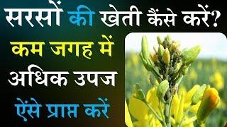 सरसो की उन्नत खेती कैंसे करें? | Mustard farming |सरसों की खेती वैज्ञानिक तरीके से लाखों रु. की कमाई