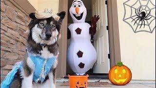 Kakoa's Pretend Play Halloween Trick or Treating!