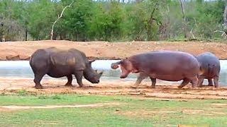 5 brigas entre animais gravadas em vídeo