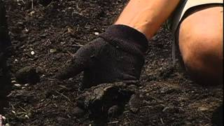 How to Maintain Your Vegetable Garden From Canadian Tire