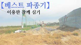 [농사]2020/5월2주-참깨 심기{베스트 파종기}
