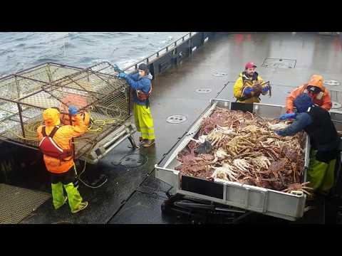 Hauling Pots Alaska King Crab Fishery 2017 On F/V Bering Star