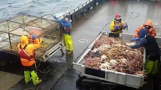 Hauling Pots Alaska King Crab Fishery 2017 on F/V Bering Star