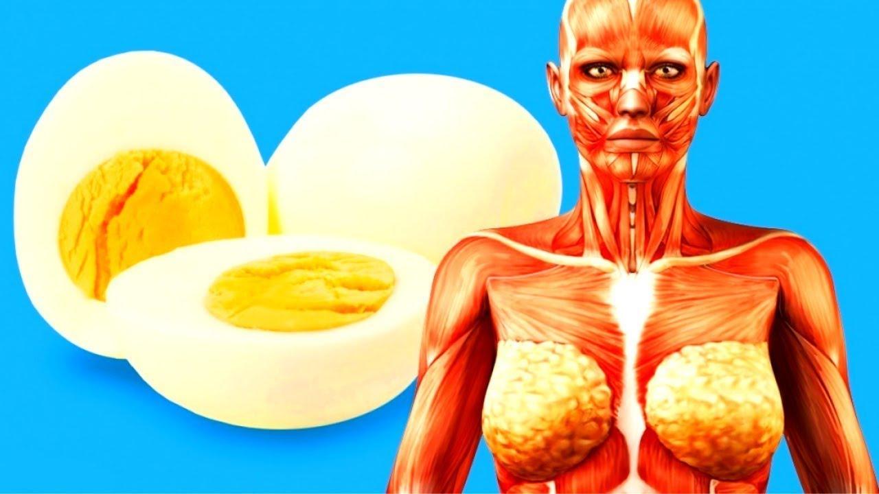Xem Điều gì xảy ra nếu bạn ăn 2 quả trứng mỗi ngày