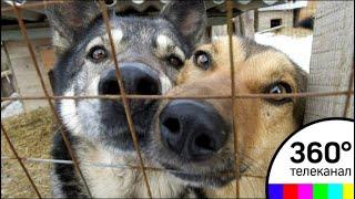 Скандал в Дзержинском: хозяева гостиницы для животных незаконно кремируют питомцев?