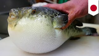 Fugu fish: Poisonous blowfish meat mistakenly sold by Japanese grocery - TomoNews