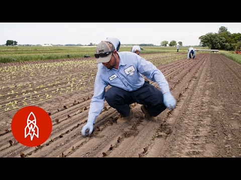 The Family Farm That Supplies World-Class Chefs