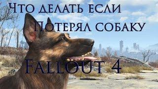 Что делать если потерял собаку в Fallout 4