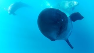 GoPro: Captain Dave and The False Killer Whales