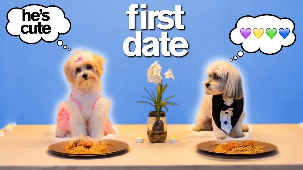 MY DOG'S FIRST DATE *Try Not To Say Aww*