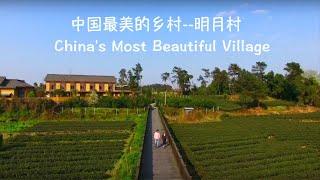 在中国最美的乡村过清明节,赏花,制茶和手作清明粑粑 |Chengdu Plus