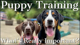 Puppy Training | The Truth About What's Really Important