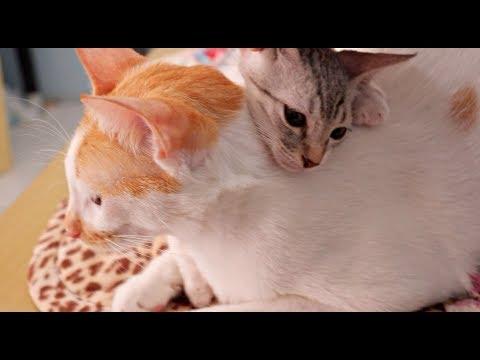 ✰Baby KITTEN Hugs & Comfort UPSET Big Brother Cat 👬😍