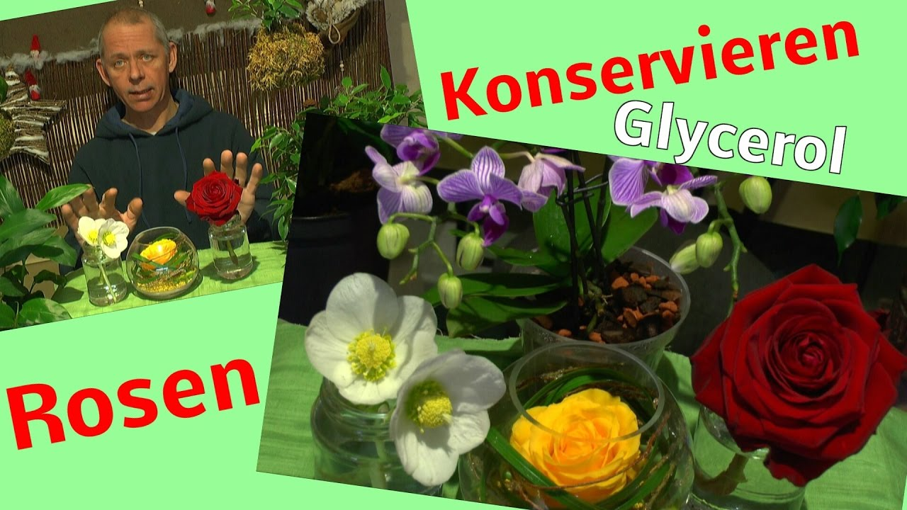 rosen konservieren mit glycerin glycerol testanfang 1 zu 2 youtube. Black Bedroom Furniture Sets. Home Design Ideas