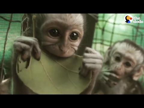 Orphaned Vervet Monkeys Love Their New Life