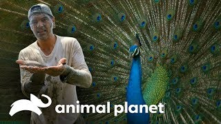 3 Animales que sorprenden por su rareza y belleza | Wild Frank en India | Animal Planet