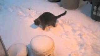 Cat wants to go outside in the snow, maybe not - Mary Cummins, Animal Advocates