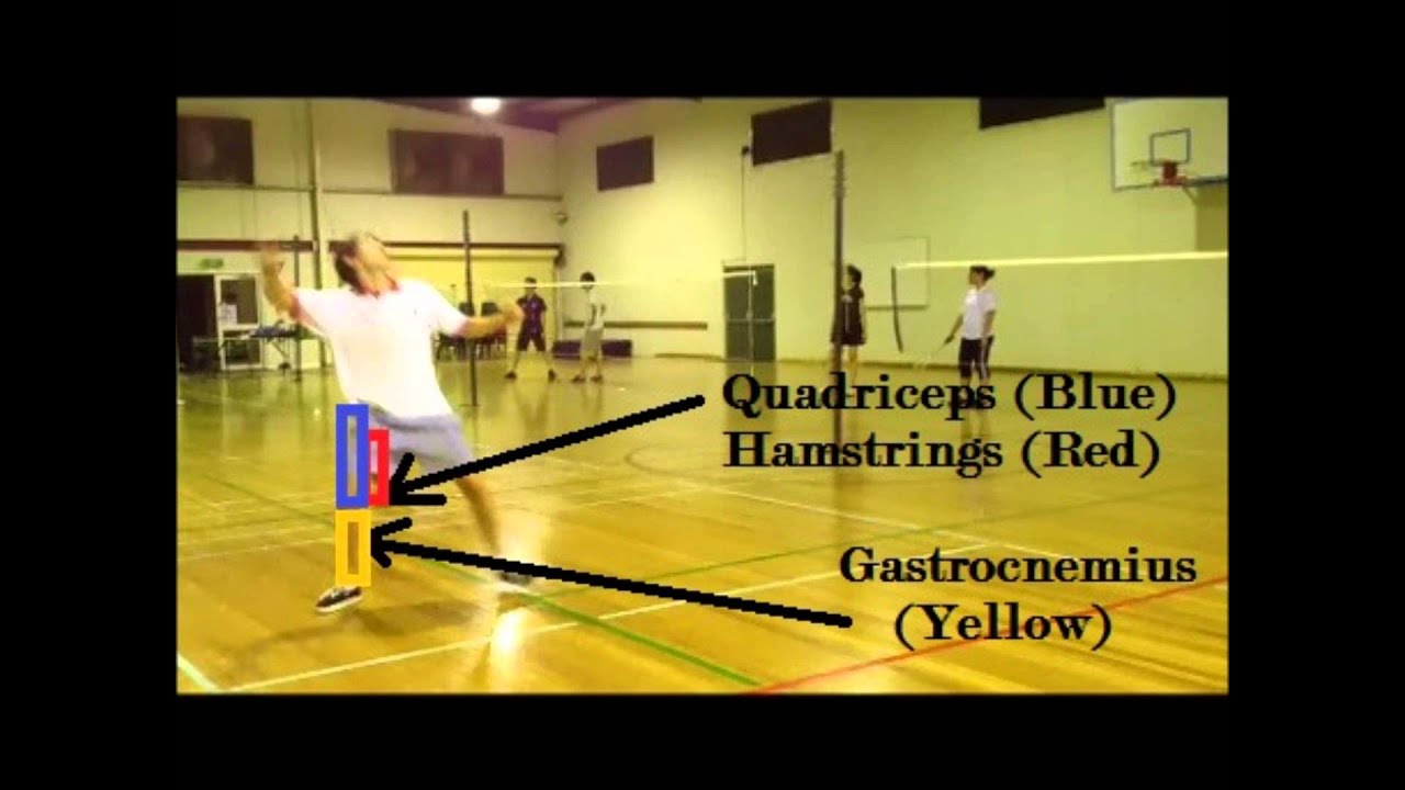 biomechanics in badminton Exactly what is the study of biomechanics in this lesson we'll define the field and explore just a few of the applications biomechanics has in our.