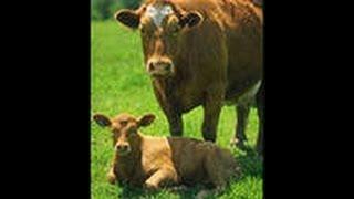 хардкорное выживание#5 коровья ферма