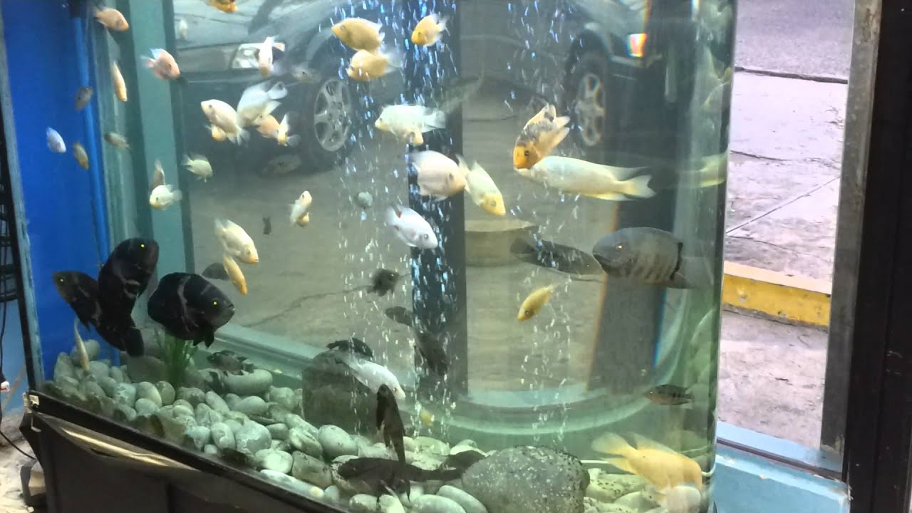 Blue acuario pecera moderna importada de china peces for Temperatura para peces tropicales acuario