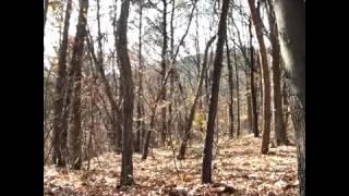 Привидение в лесу прикол
