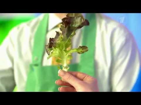 Дуболистный салат. Азбука витаминов