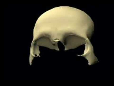 Skull Animation Frontal Bone Articulations Youtube