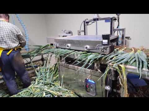 Spring onion dry peeler, spring onion machine,spring onion cleaning,대파탈피기,쪽파탈피기