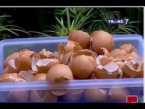 Cangkang Telur Bahan Pembuatan Pasta Gigi Youtube