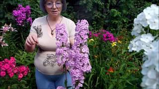 Вы не поверите! Я в саду  Натальи Ивановой! Часть I. Парадная зона. Сад коллекционера.