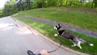 Siberian Husky Run High Speed In Slow Motion - Gopro Hero4