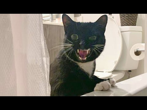 Cutest Cats And Funniest  Dogs  Try Not To Laugh or Grin  Funny Animal Vines