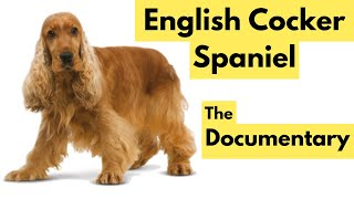 English Cocker Spaniel  Full Length Documentary