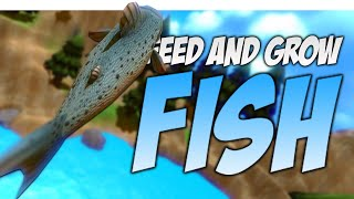 trout king of the river   feed and grow gameplay feed and grow fish funny moments river update