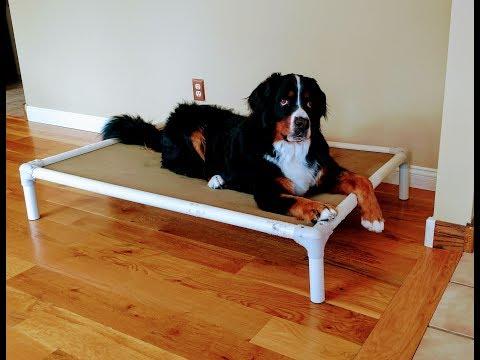 Marshall- 2yr old Bernese Mountain Dog - Best Dog Trainers in Nebraska!