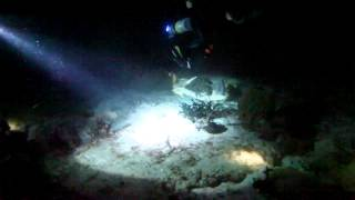 Cozumel Paradise Reef Night Dive