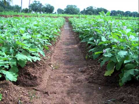 the benefits of fertilizers in farming and on animals Frequently asked questions 1 - how is organic farming different from conventional farming organic farming refers to agricultural production systems that do not use genetically modified (gm) seed, synthetic pesticides or fertilizers.