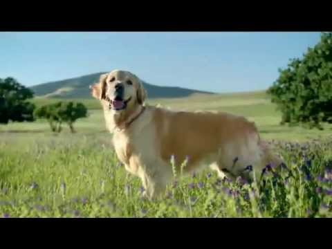 TV Commercial - Nutro Natural Choice - Wholesome Essentials - Proven Natural Nutrition