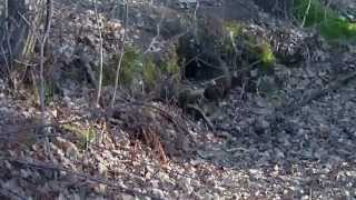 Zródło Geotermalne u Franusia.