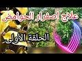 """للقضاء على اصفرار اوراق الليمون اوالحامض : الأمونترات أو """"الملحة""""ammonitrat 33%"""