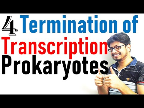 Transcription termination in prokaryotes | Prokaryotic transcription lecture 4