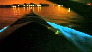 Red Tide Causes Bioluminescent Ocean in california