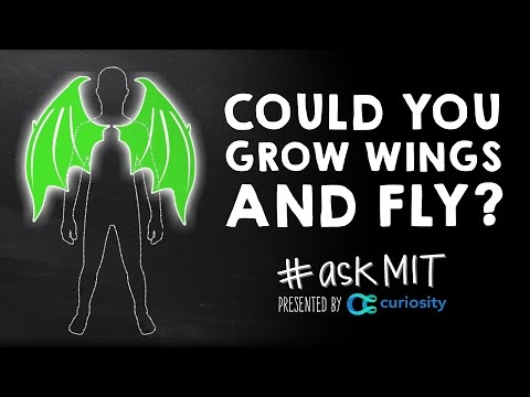 Could You Grow Wings On Your Back And Fly?
