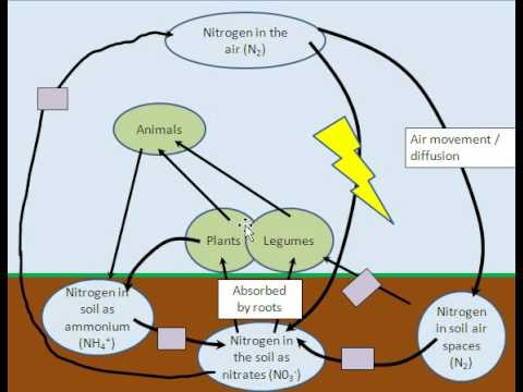 diagram of the carbon and nitrogen cycle nitrogen cycle - youtube