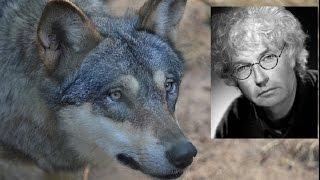 l'ultimo lupo - Film consigliato da Svideogame
